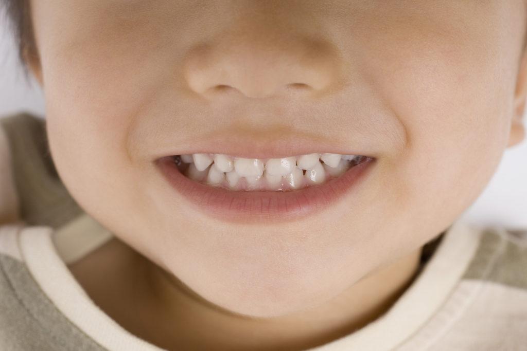 乳歯の役割